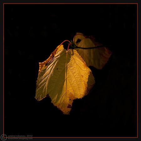 Foliage Photo Collection